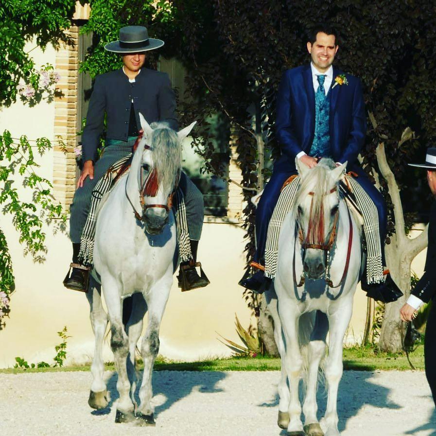 Caballos cartujanos en los eventos de la Finca Yeguada Lagloria