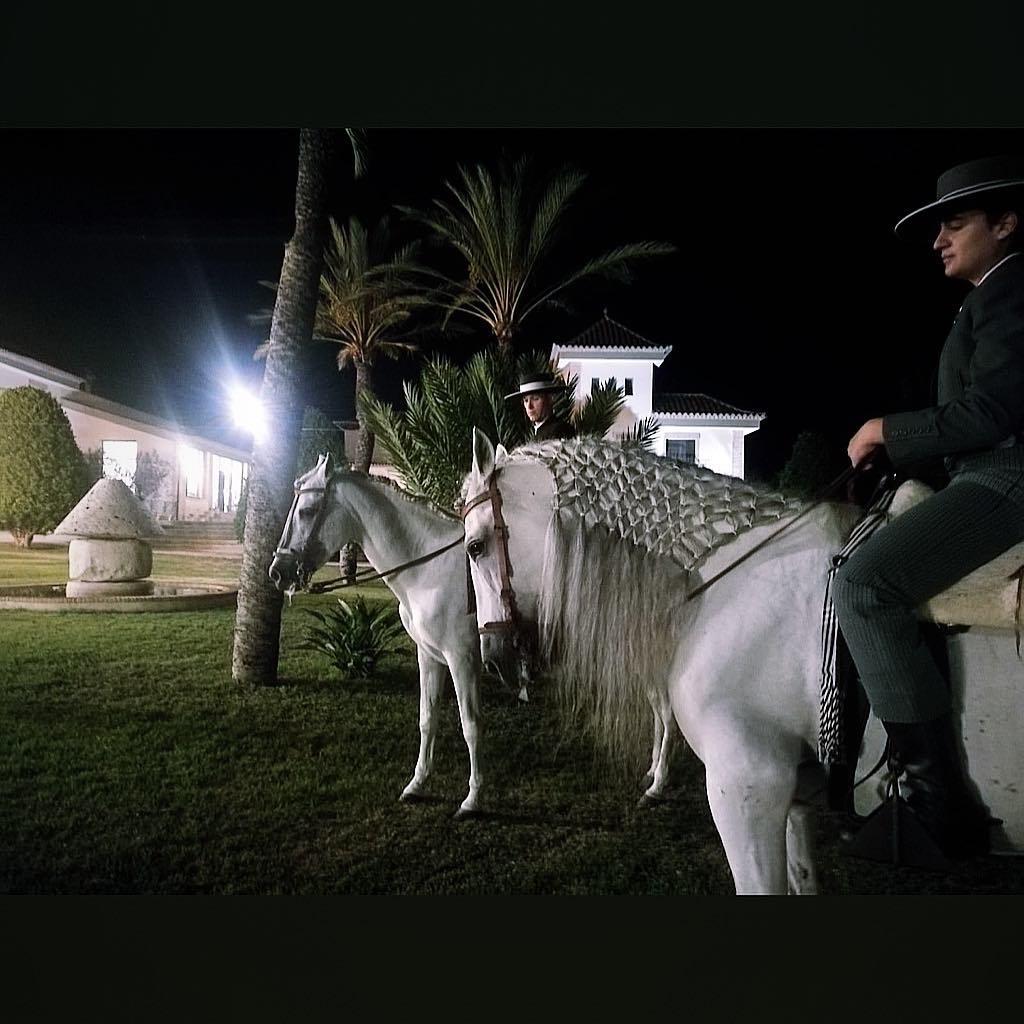 Caballo de pura raza en Yeguada Lagloria